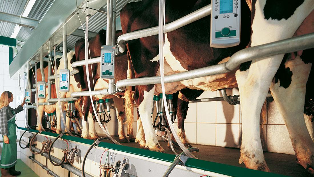 Balıkkılçığı – Süt Sağım Sistemi Video